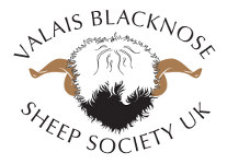 Valais Blacknose Sheep Society UK