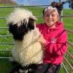 Valais Blacknose Sheep Cheshire
