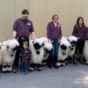 Brilliant Pictures of Kilian Schnydrig and his family with Jenni and his amazing Valais Blacknose Sheep at Miss Visp 2020
