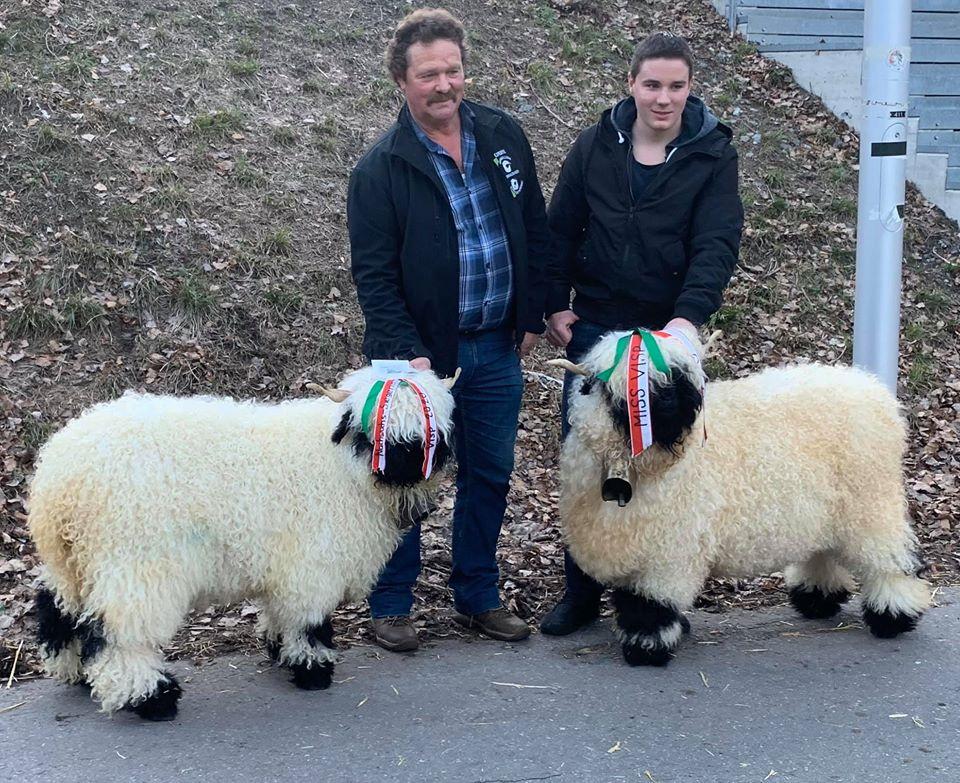 The winning Sheep at Miss VIsp 2020